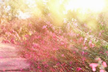 Fototapeta double exposure of flower field bloom, abstract photo