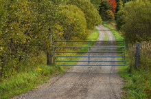 Country Lane / Driveway With A...