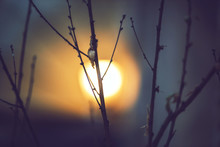Tree Branches And The Moon