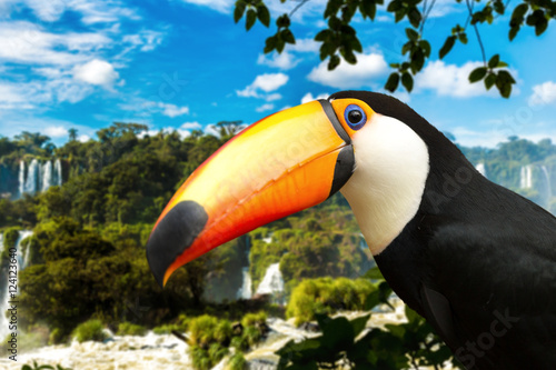 In de dag Toekan Toucan bird on the nature in Foz do Iguazu, Brazil