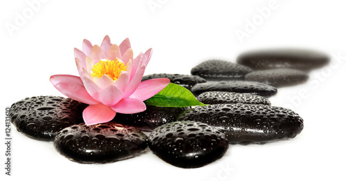 Photo Stands Water lilies Water drops on black spa stones with Lily flower