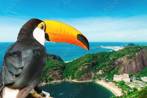 In de dag Toekan Toucan bird on the nature in Rio de Janeiro, Brazil