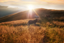 Sunset In Mountains Nature Background. Horses Silhouette At Haze And Sunbeams On Summer Meadow. Image In Vintage Retro Hipster Style