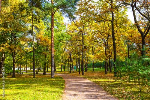 Papiers peints Forets Autumn track in autumn park