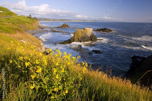 In de dag Kust Wildflowers Along Coast, Yaquina Head, Oregon, Usa
