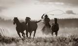 Cowboy Lassoing Horses; Senaca, Oregon, Usa - 124167830