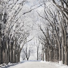 Winnipeg, Manitoba, Canada; A Road And Trees Covered In Snow In Winter