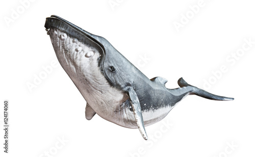 Humpback whale on an isolated white background. 3d rendering Wallpaper Mural