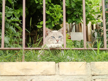 Cross Eyed Cat Looking Out Of A Fence