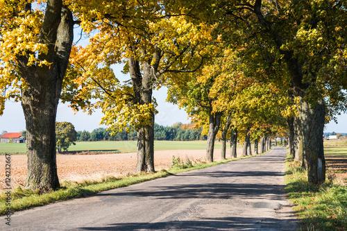 Fotobehang Zwavel geel Avenue of trees in autumn. Beautiful road. Background. Sunlight. Nature. Poland.