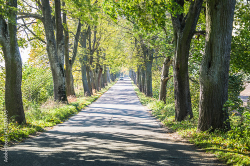 Spoed Foto op Canvas Weg in bos Avenue of trees in autumn. Beautiful road. Background. Sunlight. Nature. Poland.