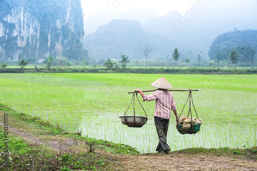 Garden Poster Rice fields Vietnamese farmer works at rice field at foggy morning. Ninh Binh, Vietnam travel landscapes and destinations. Organic agriculture at southeast asia