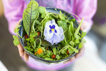 Girl's Hands Holding Bowl Of Wild-herb Salad With Edible Flowers, Cranberries And Wolfberries