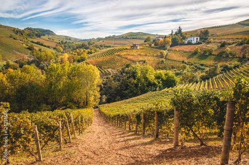 Deurstickers Heuvel Langhe vitigni Barolo Barbaresco colline paesaggio autunno, colori autunnali. Vigneti e vigne in Piemonte paesaggio Langhe e Roero. Italia