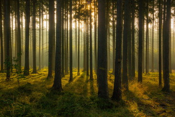 Morning forest