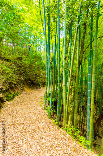 In de dag Bamboo Bamboo Forest Path To Grounds Tsumago Castle V