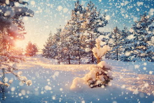Foto op Plexiglas Blauwe jeans Beautiful tree in winter landscape in late evening in snowfall