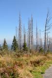 Waldsterben im Dreisesselberggebiet