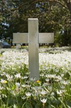 A Cross In A Field Of Wildflow...