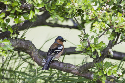 A bird perched on a tree branch;Northumberland england