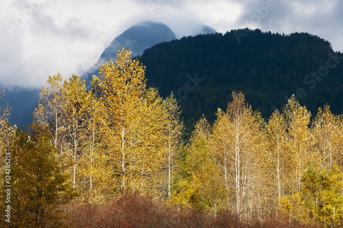 Autumn colours burst from the mountain background; Pitt Meadows, British Columbia, Canada
