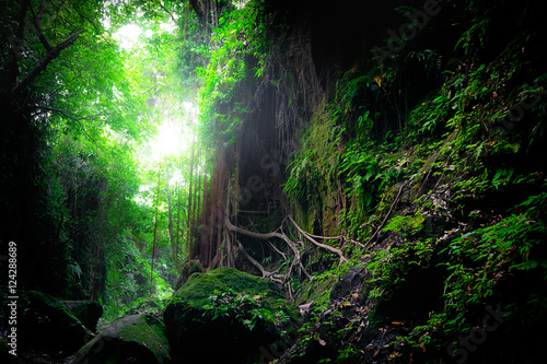 Keuken foto achterwand Bossen Fantasy mystical tropical mossy forest with amazing jungle plants and flowers. Nature landscape for mysterious background. Indonesia