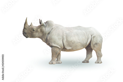 Fotografia, Obraz  Rhinoceros isolated on  white background,with clipping path