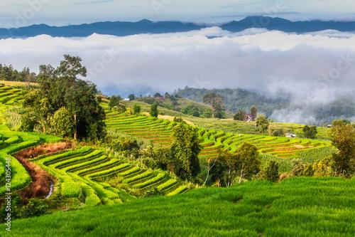 Aluminium Prints Rice fields Green Terraced Rice Field in Pa Pong Pieng , Mae Chaem, Chiang Mai, Thailand