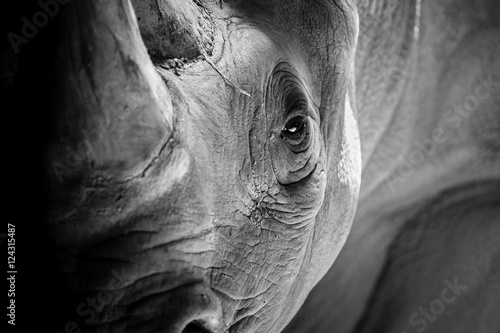 Tuinposter Neushoorn A Rhino Ready to Charge
