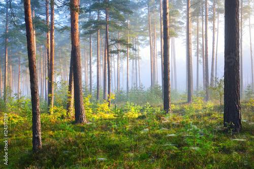 wschod-slonca-w-lesie