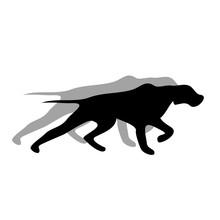 English Pointer Dog Black Silhouette Vector Illustration