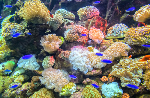 Fotografie, Tablou  Coral ecosystems aquarium beautiful colorful