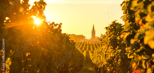 Tuinposter Wijngaard Saint Emilion Vineyard Sunrise, Bordeaux Wine