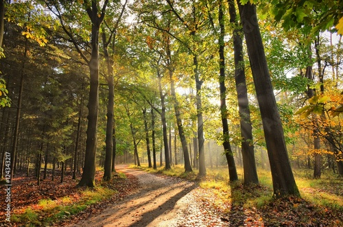 Spoed Foto op Canvas Weg in bos Sunrays of light in autumn forest with path and trees with colourful leaves.