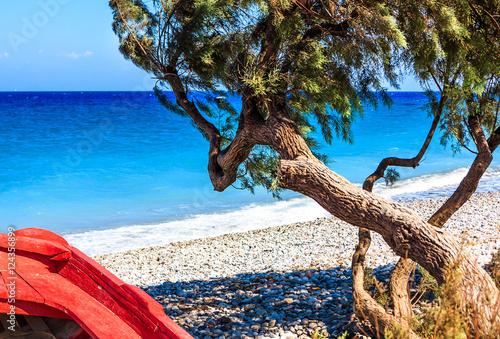 Photo  Griechische Farben - Divi Divi Baum und ein rotes Boot auf einem Strand auf Rhod