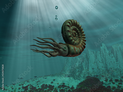 Fotografie, Obraz  Amonites en el mar