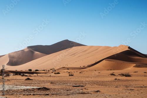Poster de jardin Desert de sable namibian desert