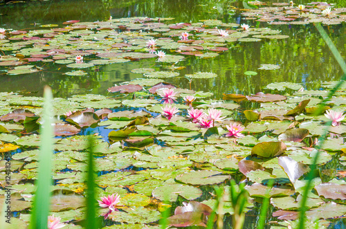 Foto  France Giverny Monet's garden spring May..