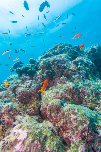 Photo  Colorful ocean landscape with lstone corals in the Maldives