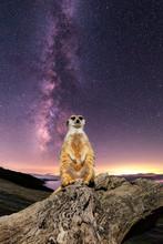 The Cosmic Meerkat
