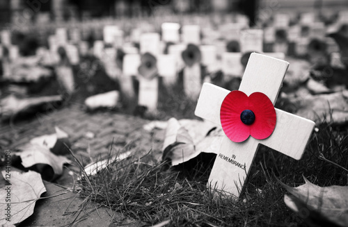 Fotografie, Obraz  Remembrance day display in Westminster Abbey