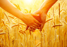 Couple Holding Hands And Walking On Golden Wheat Field Over Sunset