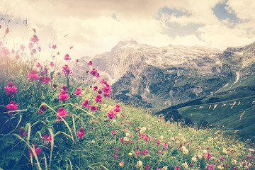 FototapetaRocky Fisht Mountains and green alpine valley with blooming pink flowers Landscape Summer Travel scenic view