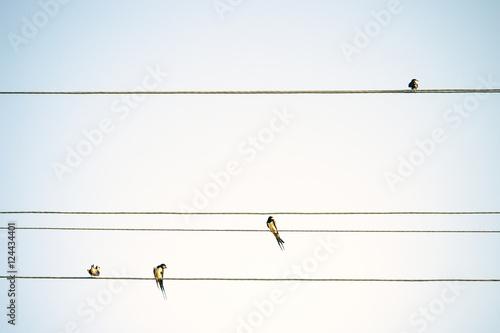 ptaki-tits-siedzi-na-drutach-minimalistyczne-tlo-wiosna