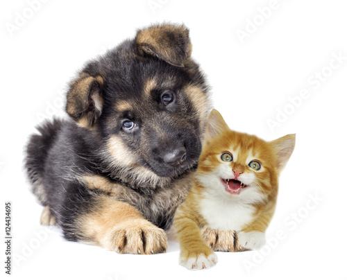 German Shepherd puppy and red kitten © Happy monkey