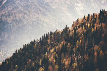 Fototapeta Góry Coniferous Forest Landscape aerial view autumn season Travel concept