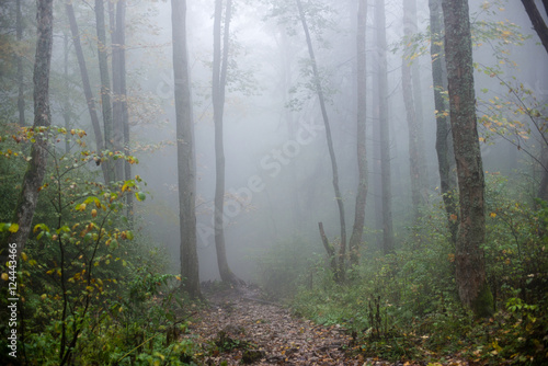 Poster Forets colorfull autumn trees in heavy mist in forest