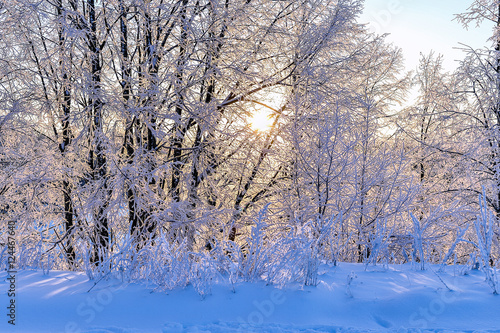 Keuken foto achterwand Bossen Bright winter landscape with trees in the forest at sunrise