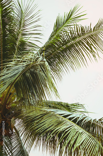 Fotografie, Obraz  Palm tree and blue sky with clouds. Vintage post processed.