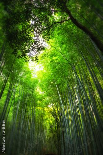 Foto op Plexiglas Bamboe Bamboo Forest, Kyoto